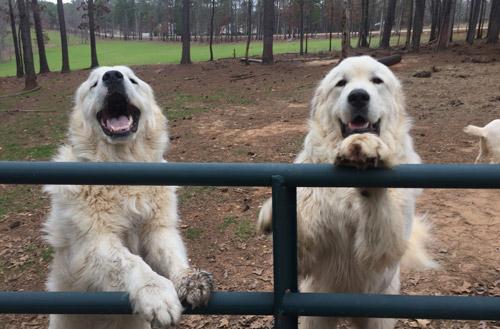 Stillmeadows Cabins Pet Friendly
